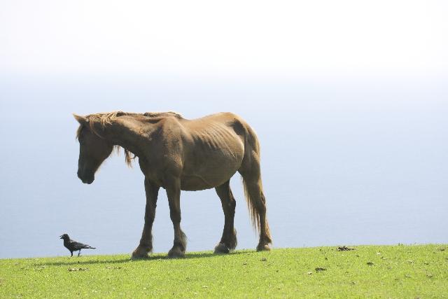 どう考える?辛く悲観的なときは「人間万事塞翁が馬」